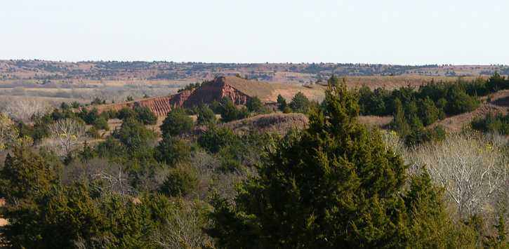 Red Cedars lining the Kansas Red Hills