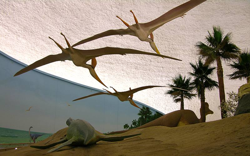 Flying dinosaurs at the Sternberg Museum in Hays, Kansas