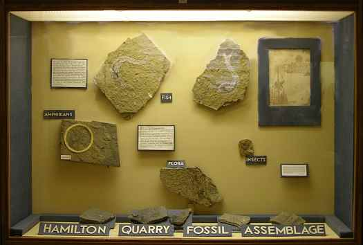Johnston Geology Museum - Hamilton Quarry Fossil Assemblage