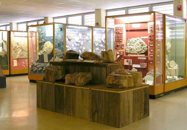 Petrified wood  in the Johnston Geology Museum