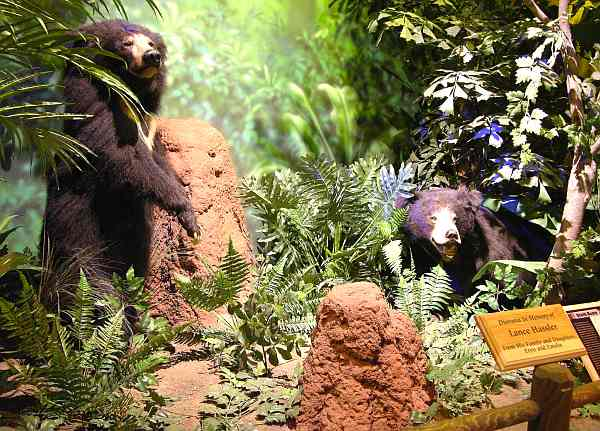Sloth bears at Rolling Hills Wildlife Adventure'