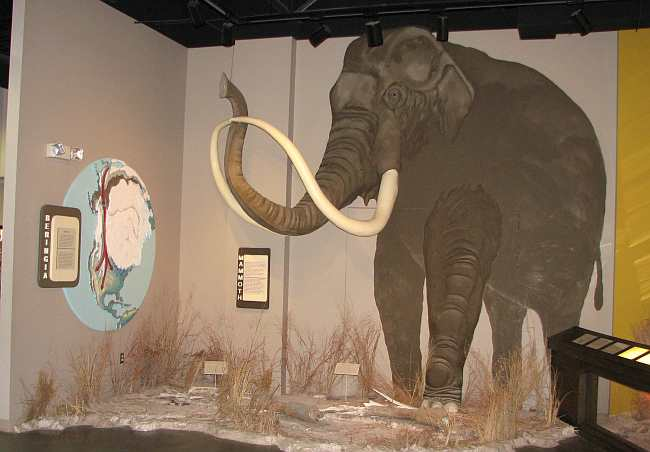 Mastadon tusks at the Finney County Historical Museum