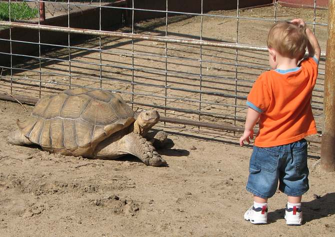 giant tortoise and little boy