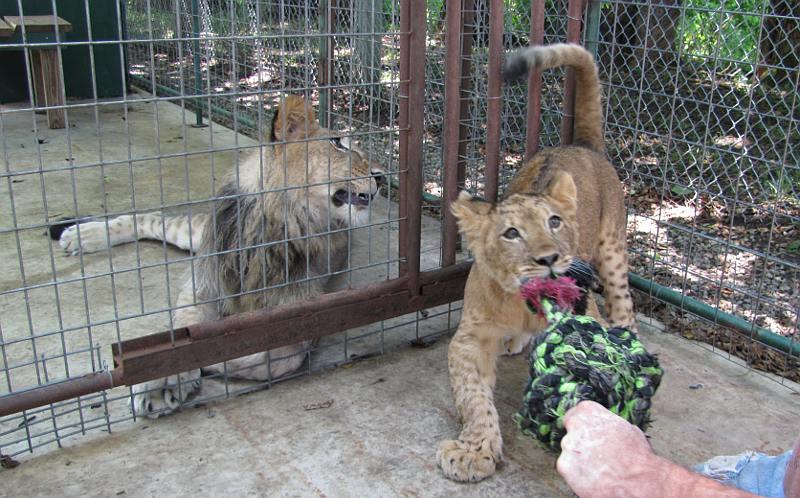 Cedar Cove Feline Conservation Park & Education Center