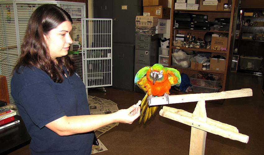 Delia Lister and Charlie the Catalina macaw