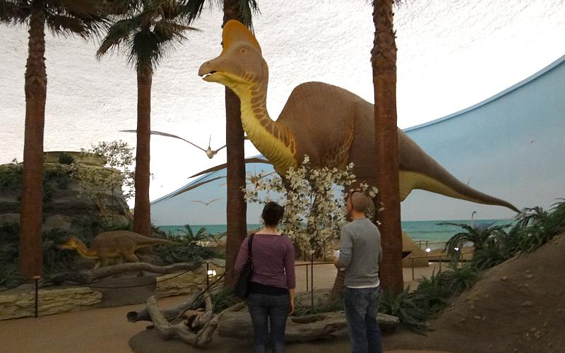 duck-billed Dinosaur at the Sterberg Museum  in Hays