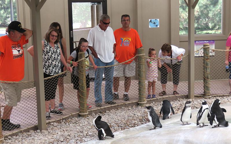 black-footed penguins at Tanganyika WIldlife Park